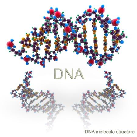Molecule structure of DNA