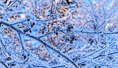 Frozen twigs in forest Stock Photo