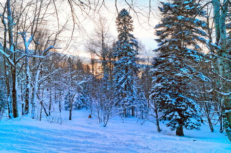 Winter mountain landscape under snow  sunset time Stock Photo