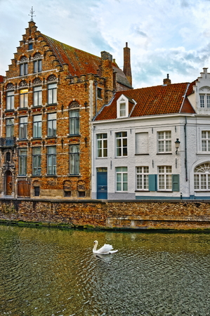 Swans on canals of Bruges, Belgium. Winter view.
