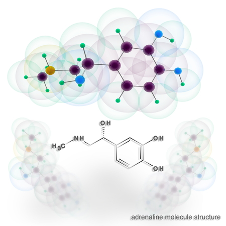 adrenalin: Adrenalin molecule structure. Three dimensional model render Stock Photo