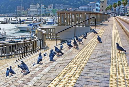 Doves on embankment. Atami city, Shizuoka, Japan