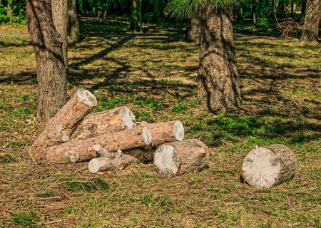sawn: Heap of sawn pine logs in a park