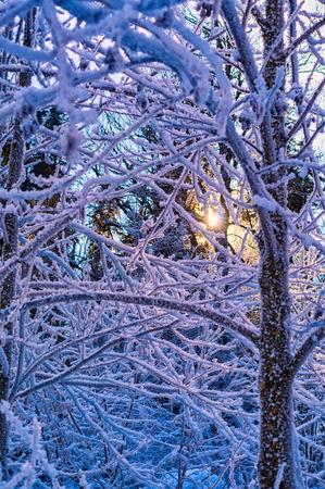Winter sun in frozen forest Foto de archivo