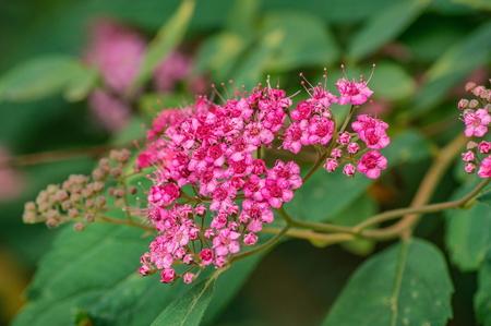 Pink flowers on green background Foto de archivo