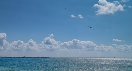 Sea horizon with flying seagull