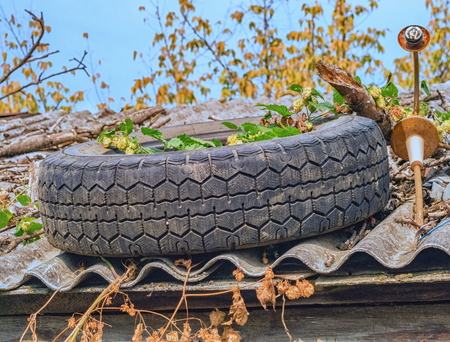 Old tire on a roof