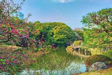TOKYO, JAPAN - MARCH 29, 2016: Springtime in Shinjuku Gyoen Park - Tokyo Japan Stock Photo