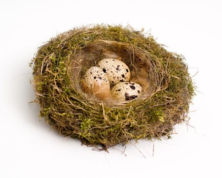 Birds nest with eggs at white background Stock Photo - 3509896
