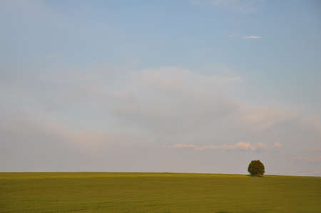 Scenic peaceful landscape with green grass and lonely tree