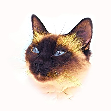 Cute siames drawing cat face portraite.