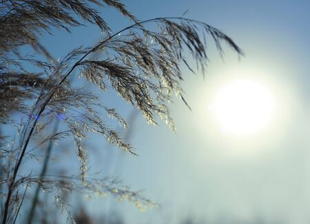 Nature background with grass and bokeh lights.