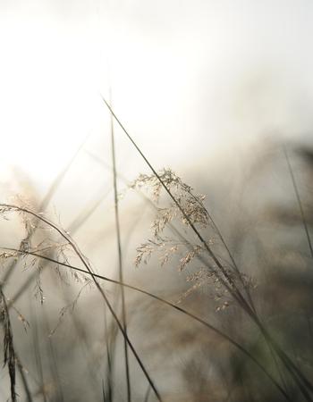 Natur Hintergrund mit Himmel, Sonne und Gras Standard-Bild - 88407852