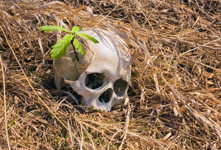 Human skull in yellow grass and oak shoot