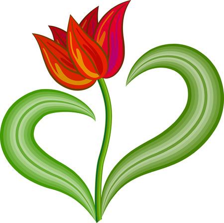 tulipe rouge: Red tulip fleurs avec deux feuilles