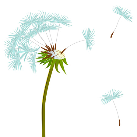 vector dandelion and flying seeds Illustration