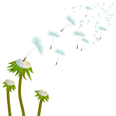 vector dandelion and a lot of flying seeds Illustration