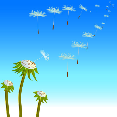 vector dandelion and a lot of flying seeds Vector
