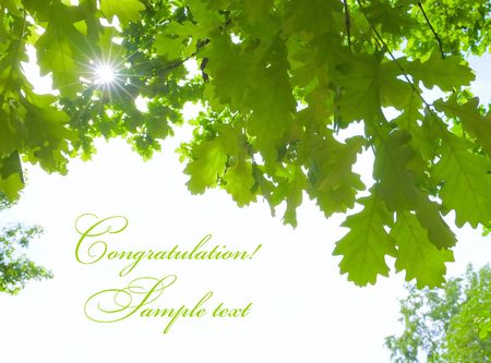 trees photography: Sunshine oak leaves and white place for text Stock Photo