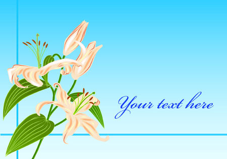 Branch with four lily flower and leaves and place for text Illustration