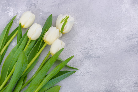 White spring tulips with copy space for mothers day greetings Stock Photo