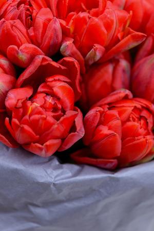 Close-up bouquet red tulips. Background for greetings card Stock Photo
