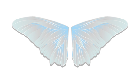 Vector butterfly wings on a homogeneous background