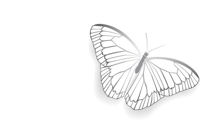 beuty: Butterfly with open wings in a top view as a flying migratory insect butterflies that represents summer and the beauty of nature. Illustration