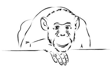 singe Sad posa sa tête sur une patte. esquisser