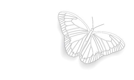 migratory: Butterfly with open wings in a top view as a flying migratory insect butterflies that represents summer and the beauty of nature. Illustration