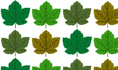 Seamless with maple leaves on a white background