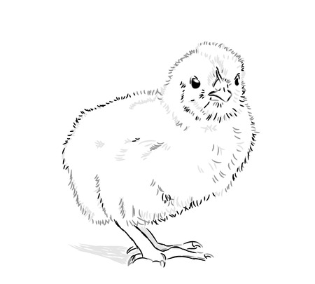 Chicken Vector black and white on a white background