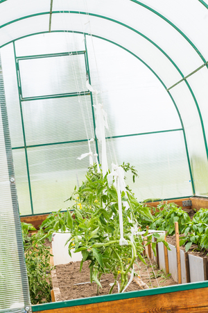 topsoil: Growth of peppery and tomato plants in greenhouse.