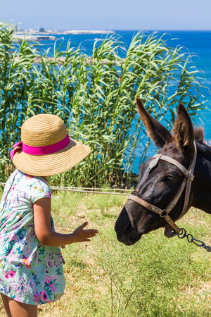 feeds: The girl in the straw hat feeds brown colored donkeys.