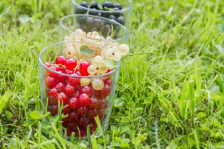 glass containers: Freshly picked garden currant in glass containers on grass.