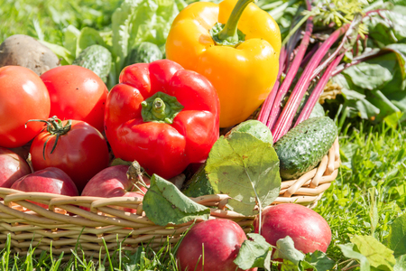 remolacha: Fresh organic carrots, beet, potatoes, cucumbers, tomatoes, sweet peppers and apples in a round wattled basket.