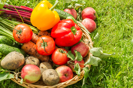 Fresh organic carrots, beet, potatoes, cucumbers, tomatoes, sweet peppers and apples in a round wattled basket.