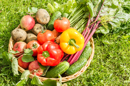 wattled: Fresh organic carrots, beet, potatoes, cucumbers, tomatoes, sweet peppers and apples in a round wattled basket.