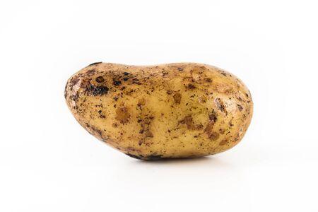 One ripe potato on a white background. Close up.