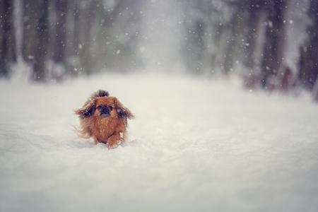 snowly dog