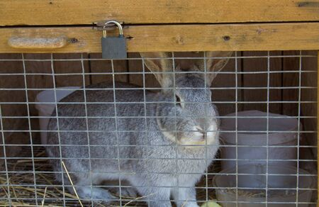 rabbit in a cell