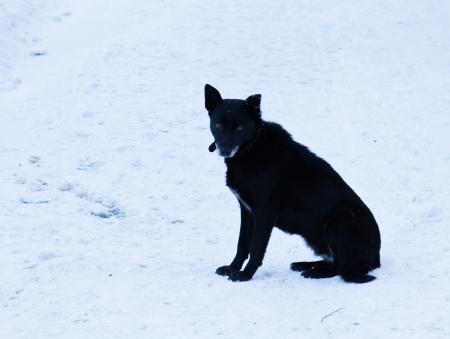 mongrel dog sitting in snow Stock Photo - 16726648
