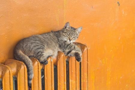 gray cat lying on radiator