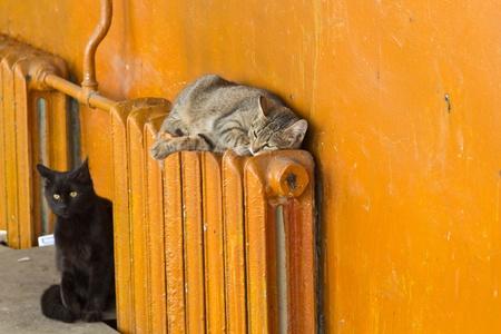 gray cat lying on radiator Stock Photo