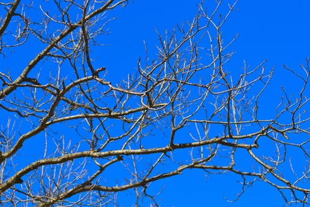 Spring branch on a background of blue sky Stock Photo - 19284191