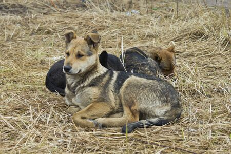 three stray dogs lying on the ground photo