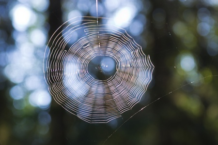 web on a background of forest photo