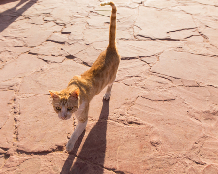 redhead homeless cat is walking on the road photo