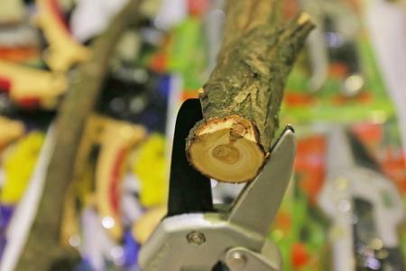 pruner: pruner cuts thick branch Stock Photo