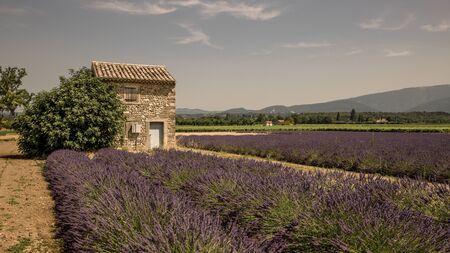 shed in a lavender field in Drôme Provençale